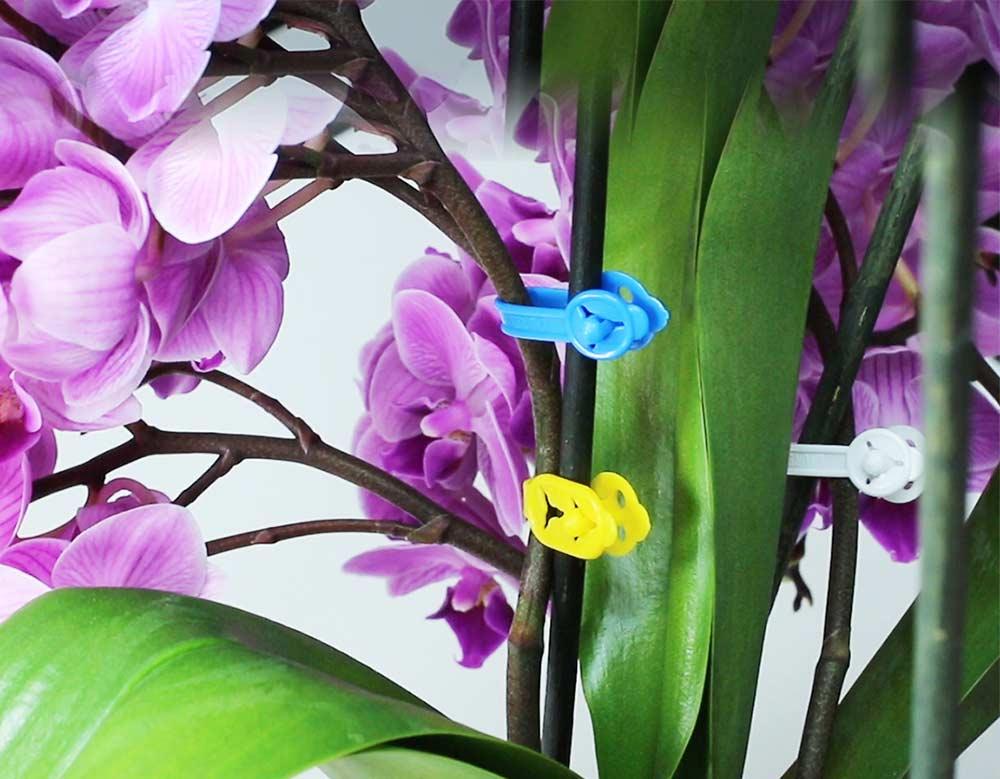 Floristik und Garten